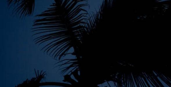 La luna y la palmera