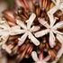 Unknown Flower 3