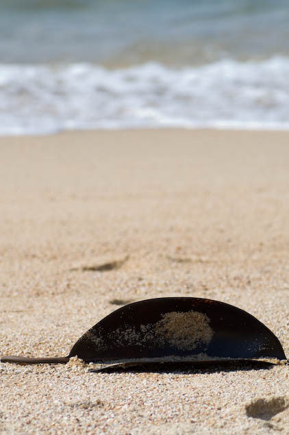 Ocean Leaf