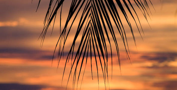 Palmset