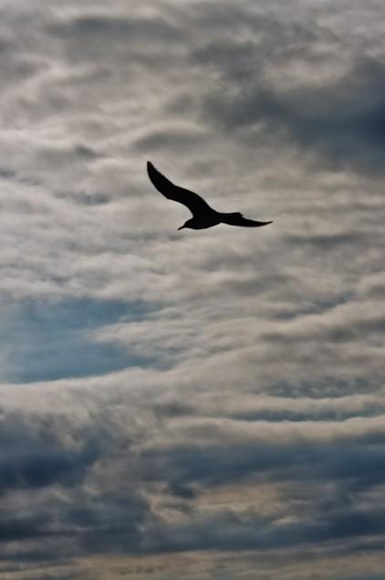 fly…fly away