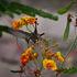 colibrí 2 – Hummingbird 2