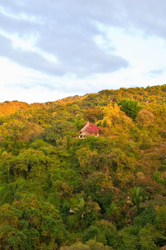 Little House on the Jungle