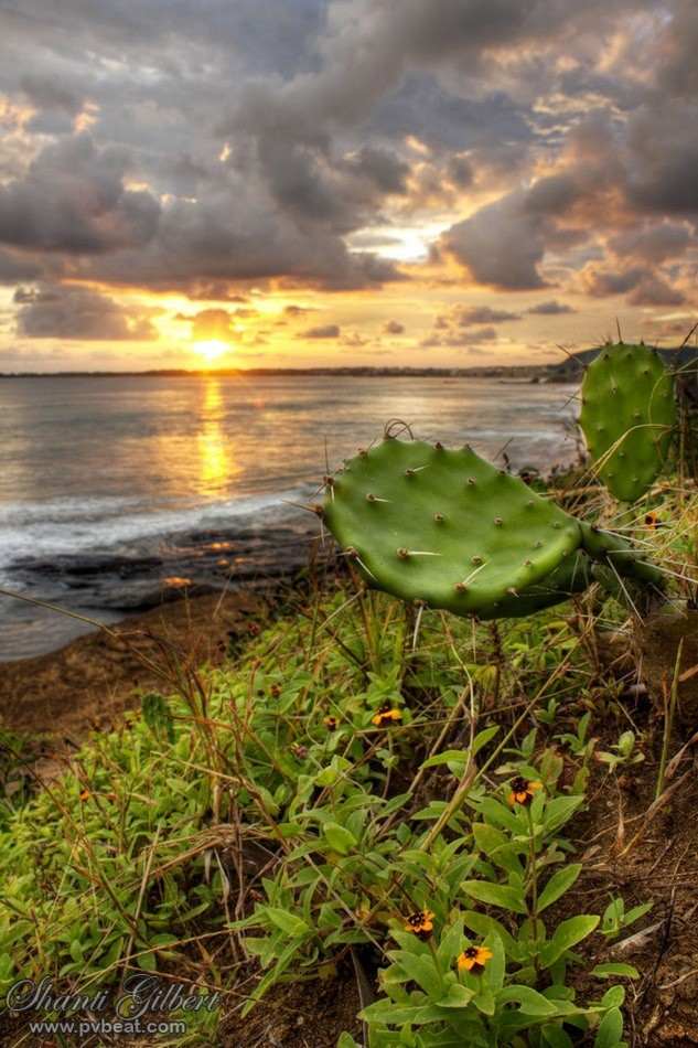 Nopal Sunset at Palmitas, Nayarit